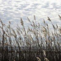 Весна на Лиепайском озере (5) :: Сергей Садовничий