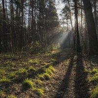 Утро в лесу :: Yuri Silin