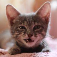 Моя кошка.Бусинка. :: Яна Езерская Горбова