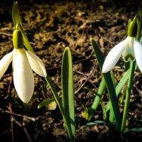 Весна пришла) :: Артьом Данильчук