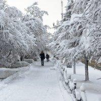 Снежный Магадан :: Koch