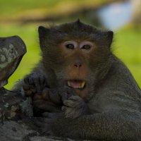 Обитатель Angkor Wat :: Александр Репко