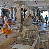 Индия, Мурдешвар, брахман созерцает статую Коровы-Матери :: Владимир Шибинский