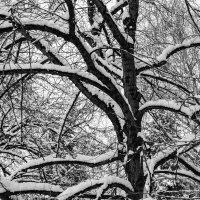 многоликость природы :: Арсений Корицкий