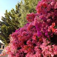 цветы :: Елена Пискарева