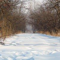 Зимний сад. :: Viktor Сергеев