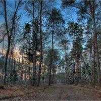 Вечер в весеннем лесу :: Nikita Volkov