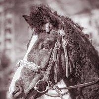 а пони - тоже кони :: Татьяна Исаева-Каштанова