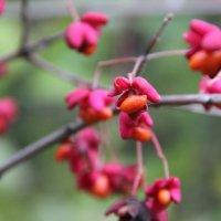 Яркие краски осени. :: Yuliya Arhipova