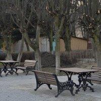 Старый парк... :: Анастасия Меркулова
