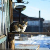 Деревенская кошка :: anton dsgn