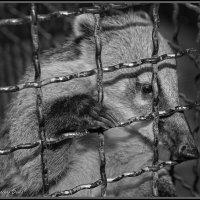 «По ту сторону клетки» :: Denis Aksenov