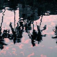 вода :: Серафима Мирная