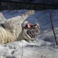 Весна,однако! :: Светлана Винокурова