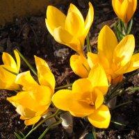 Весна :: Александр Запыленов