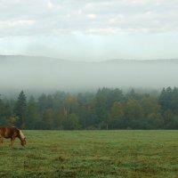 Ленарго и туман :: Анна Агеева