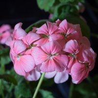Домашний цветок :: Max Flynt