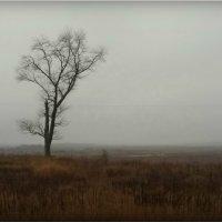 Осень! :: Владимир Шошин