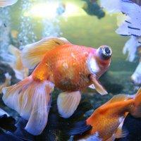 рыбий глаз :: pavel belov