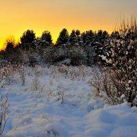 Зимний закат. :: Leonid Volodko