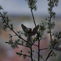 Праздник приближается..... :: Aleksandr Kondratenko