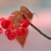 Цветы :: Николай Емелин