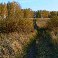 Тёплая осень. :: Евгений Суханов