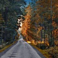 по лесной дороге :: Валерий