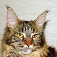 Кошка Бастя. :: Николай Тегин