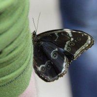 на выставке тропических бабочек :: Наталья Василькова