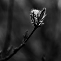 Ветром занесло :: Лиля Ахвердян