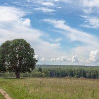 Священная сосна :: Леонид Никитин