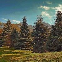 Пригорок весной :: Ростислав