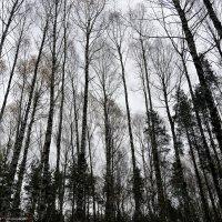 Осенний  лес.Ритм :: Валерий Викторович РОГАНОВ-АРЫССКИЙ
