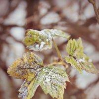 leaves :: Arina Kekshoeva