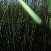Трава :: Julia Blik