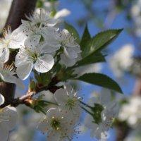 весна :: Людмила lyudmila