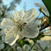 Весна :: Игорь Мукалов