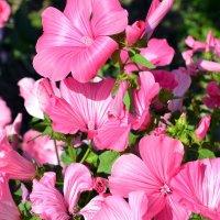 Цветы :: Tatyana Semerik