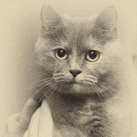 Любимая кошка :: Александр Данильчев