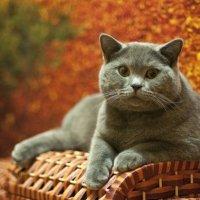 Осенний котЭ :: Юлия Годовникова
