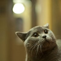 кошачий полтергейст или КТО здесь? :: Юлия Годовникова