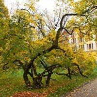 осень :: Алексей Кудрявцев