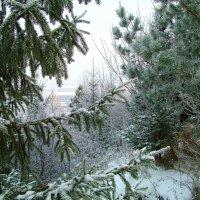 А где то в лесу,когда то зимой :: Я-славка Красавка