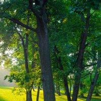 Закат в Гатчиском парке :: Тимофей Матусовский
