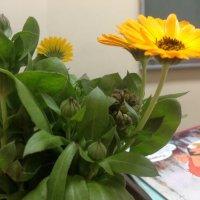 Цветок :: Устя Припорова