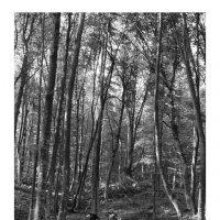 буковый лес :: Cesa Btyjbyu