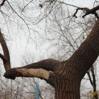 идет зима... :: Альбина Еликова