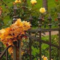 Осенняя калитка :: Елизавета Вавилова