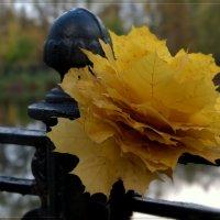 Букет кленовых листьев :: Мария Исаева